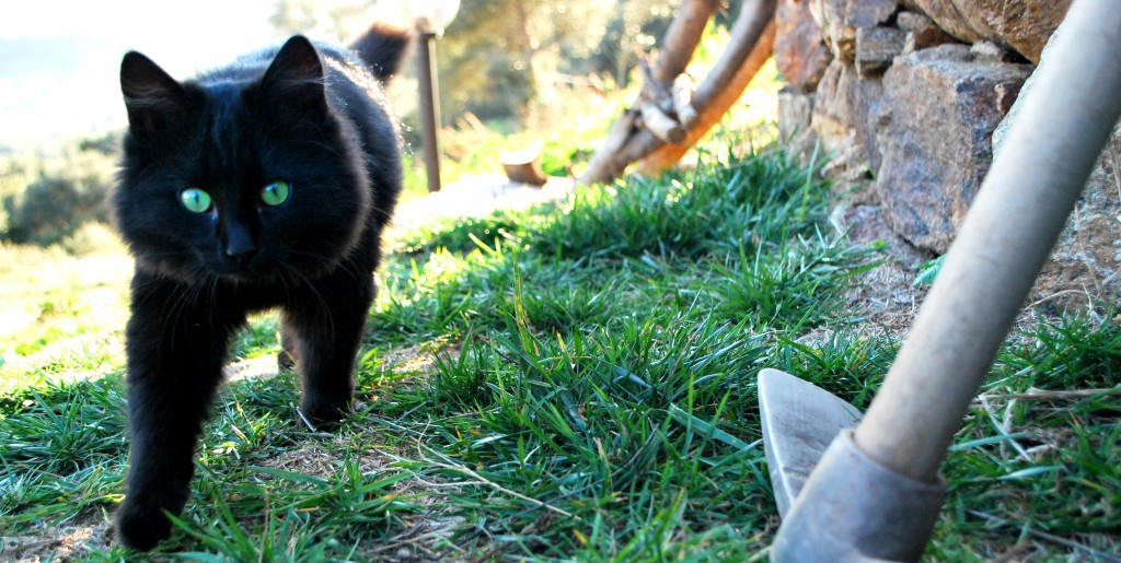gatto Bentu
