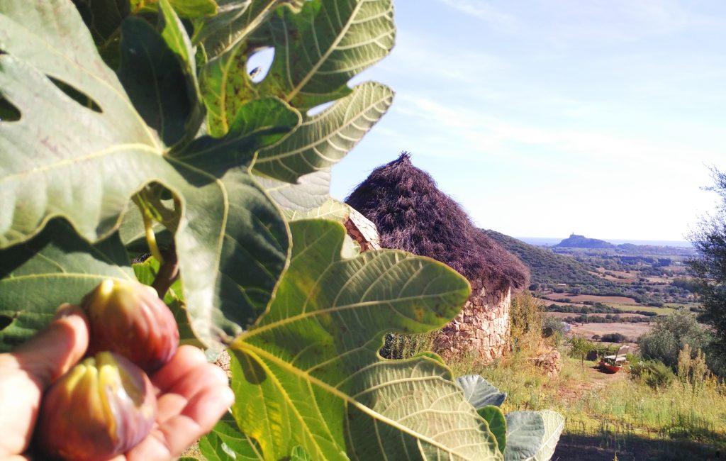 frutta bio sardegna