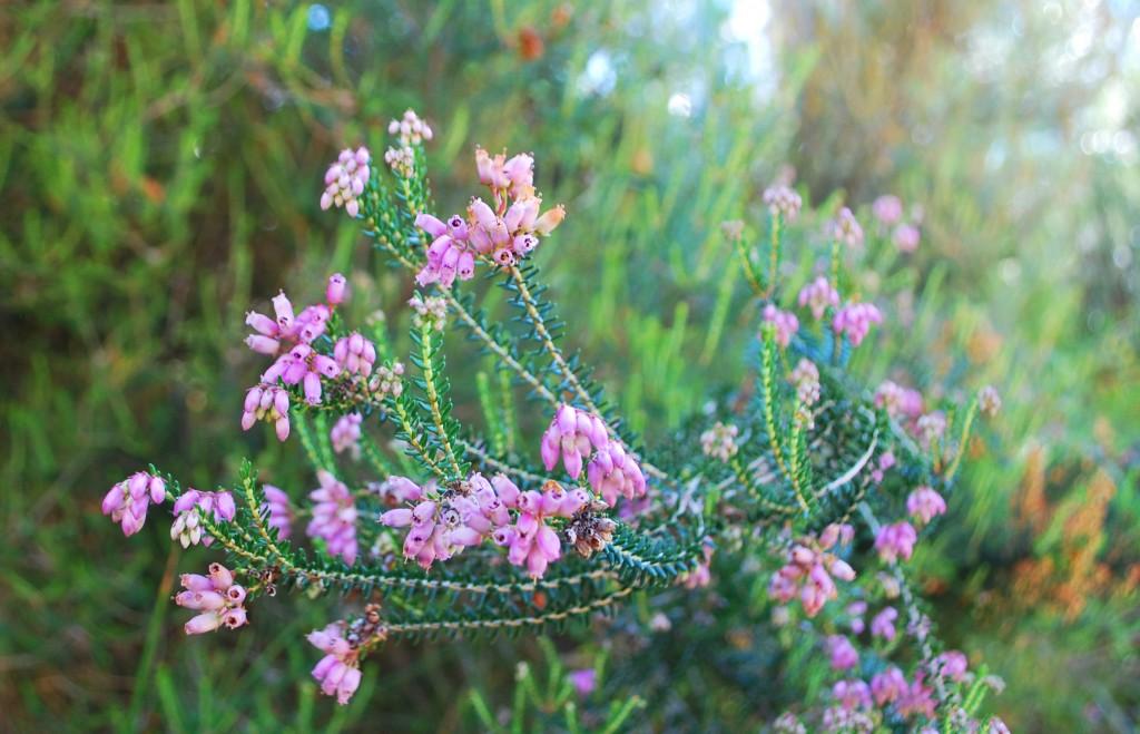 erica fiorita