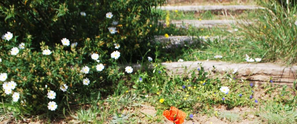 fiore madre natura
