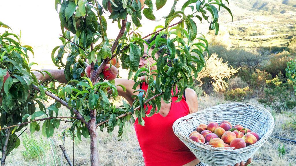 frutta a colazione sardegna