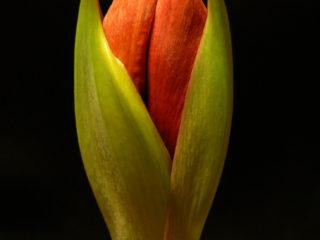 La Tua Fioritura: Sei un fiore da seme o da bulbo?