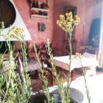 elicriso sensi olfatto aromaterapia
